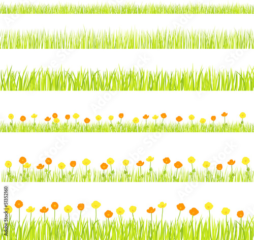 vector flower field
