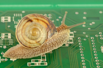 Garden Snail in motion on circuit board
