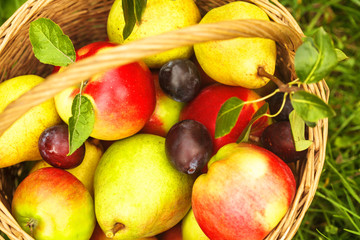Apples and pears on grass