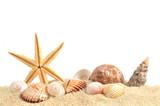 Muschel und sand
