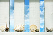Shells at sea on the fence on beach abstract background concept