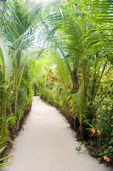 walkway path through tropical jungle to beach  resorts Little Co