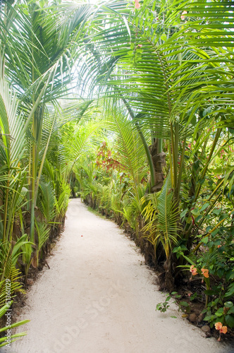 walkway path through tropical jungle to beach  resorts Little Co