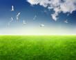 Field of grass, birds in blue sky and sun