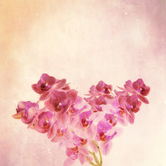 textured old paper background phalaenopsis orchid
