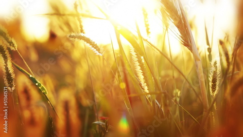 Background with grass and sunshine