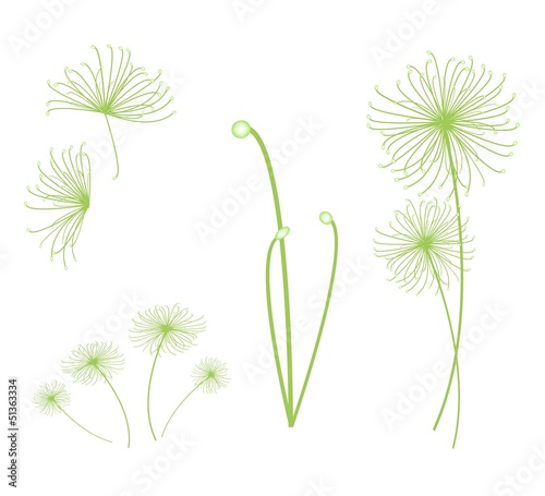 A Set of Cyperus Papyrus Plant on White Background