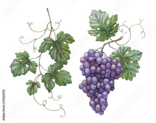 Watercolor illustration of grapes with leaves