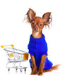 Toy Terrier with shopping cart isolated on white. Funny little d