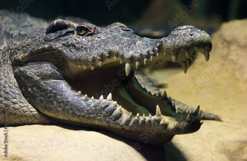 Fototapeten Krokodile Siamese freshwater crocodile smiling