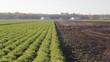 Farmers field. Holland Marsh, Ontario, Canada