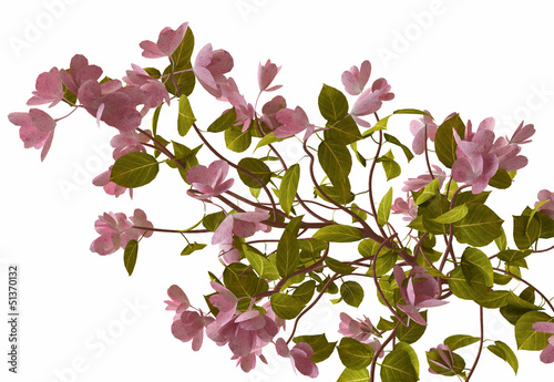 Pink Flowers Blooming on Tree Branch in 3D