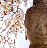 Buddha and cherry blossoms