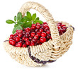 Ripe cranberries with leaves in basket on white background