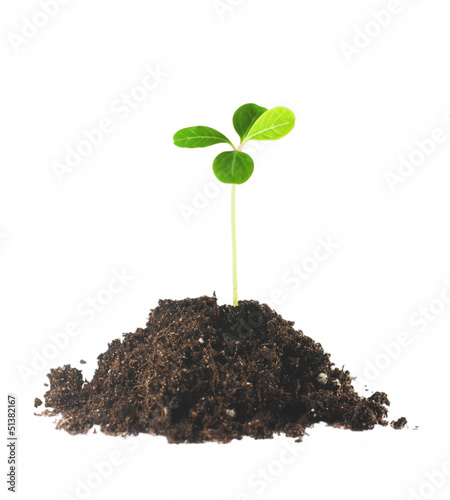 Gentle green plant in soil isolated