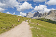 Horses along a hiking trail in the Dolomites