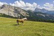 Horse in the wonderful Dolomites scenario, during Summer