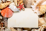 postcard in sea shells frame