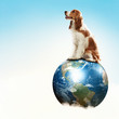 Dog with the Earth.