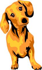 smooth - haired dachshund