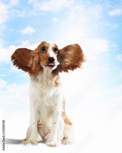 Funny dog portrait