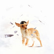 Dog-aviator wearing a helmet pilot. Collage