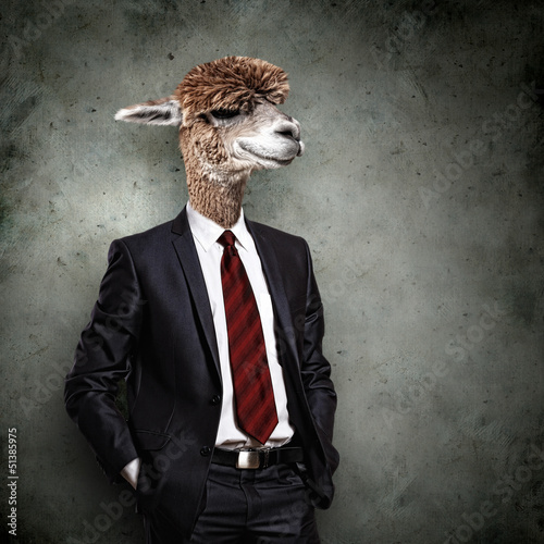 Fotobehang Kameel Portrait of a funny camel in a business suit