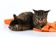 Zwei müde Schmusekatzen