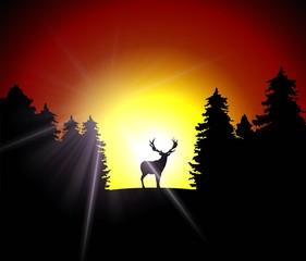 deer - sunset - forest