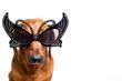 Dog in festive glasses