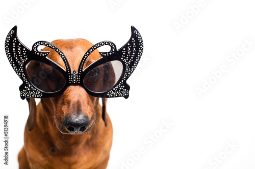 Foto op Canvas Dragen Dog in festive glasses