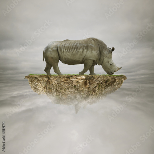 rhino on the rock in the sky