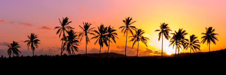Lignée de cocotiers au coucher de soleil - Ile de la Réunion