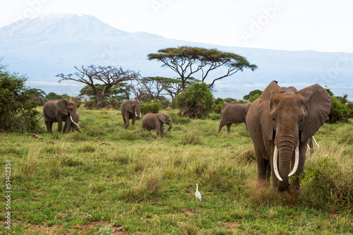 canvas print picture Kenya 2013