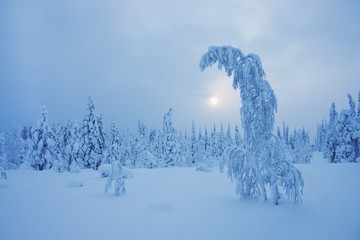 Magical Lapland winter scene