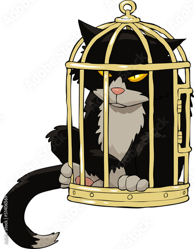 Cat in the bird cage
