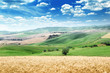 summer landscape of Tuscany, Italy