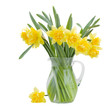 bouquet of blooming  daffodils