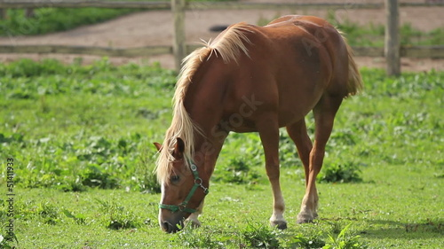 horse grazing on a meadow