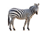 Fototapety zebra isolated
