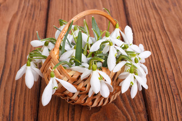Snowdrops in a basket from a rod against a wooden board