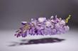 canvas print picture - Wisteria Sinensis - Mor salkim - Purple cluster - Levitation