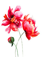 Belle fleur de pivoine