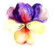 Quadro Violet flower