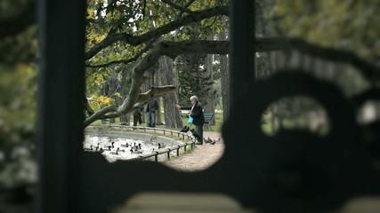 Мужчина кормит уток и голубей в парке Парижа