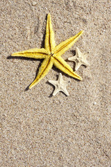 fondo de verano con estrellas de mar