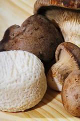 Crottin de chevrè con funghi cardoncelli