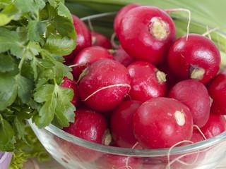 garden radish in a plate
