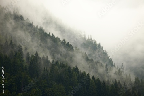 Forest Fog - 51427106