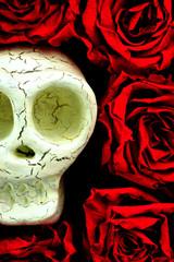 骸骨 薔薇